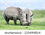 African White Rhino  Lake...
