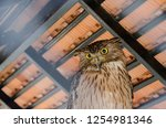 the owl is in a cage. | Shutterstock . vector #1254981346