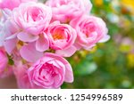 Stock photo a close up of beautiful roses 1254996589