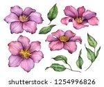 Watercolor Clematis  Hand...