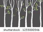 tree birch background | Shutterstock .eps vector #1255000546