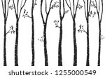 silhouette  tree birch... | Shutterstock .eps vector #1255000549
