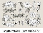 blooming flower. set collection.... | Shutterstock .eps vector #1255065370