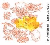 collection of lemon and lemon... | Shutterstock .eps vector #1255087693