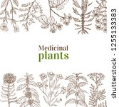 template with medicinal plants. ...   Shutterstock .eps vector #1255133383