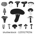 poisonous and edible mushroom...   Shutterstock .eps vector #1255179256