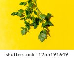 parsley on a yellow background  ... | Shutterstock . vector #1255191649