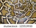 boa snake from top view ...   Shutterstock . vector #125519930