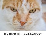 grumpy cat eyes portrait  | Shutterstock . vector #1255230919