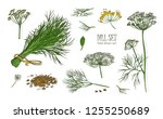 collection of elegant drawings... | Shutterstock .eps vector #1255250689