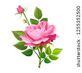 beautiful flower of pink rose... | Shutterstock .eps vector #1255352500