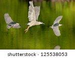 black crowned night heron in... | Shutterstock . vector #125538053