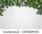 christmas fir tree branch... | Shutterstock . vector #1255405930