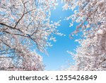 looking up  low angle view on... | Shutterstock . vector #1255426849