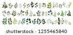 collection of greenery leaf... | Shutterstock .eps vector #1255465840