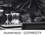 preparing for outdoor party in... | Shutterstock . vector #1255483279