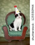 Stock photo cute kitten in a chair with birthday party hat 125550944