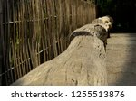 long wood logs outdoor bench... | Shutterstock . vector #1255513876