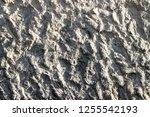plaster wall texture... | Shutterstock . vector #1255542193