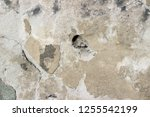 plaster wall texture... | Shutterstock . vector #1255542199