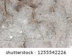 plaster wall texture... | Shutterstock . vector #1255542226