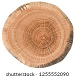 Oak Wood Texture. Tree Slice...