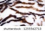 texture  fur  figure. painted... | Shutterstock . vector #1255562713
