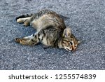 Dead Cat On The Road