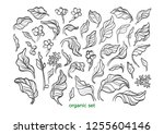 vector nature set. realistic... | Shutterstock .eps vector #1255604146