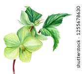hellebore flowers on an... | Shutterstock . vector #1255678630