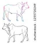 zebu cow contour  freehand... | Shutterstock .eps vector #1255720249