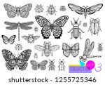 big hand drawn line set of... | Shutterstock .eps vector #1255725346