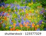 Heliotrope Ridge Wildflowers....