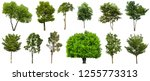 collection beautiful trees... | Shutterstock . vector #1255773313