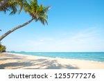 beautiful landscape of coconut... | Shutterstock . vector #1255777276