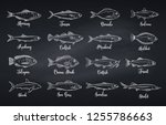 Stock vector outline fish engraved seafood with bream mackerel tuna or sterlet catfish codfish and halibut 1255786663