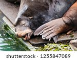 seals along the oregon coast... | Shutterstock . vector #1255847089