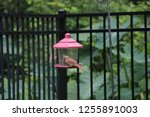 northern cardinal male female... | Shutterstock . vector #1255891003