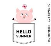 hello summer. pig face head in... | Shutterstock .eps vector #1255898140