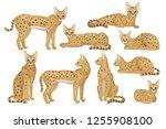 flat vector set of african... | Shutterstock .eps vector #1255908100