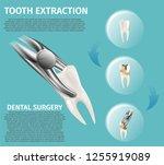 realistic illustration...   Shutterstock .eps vector #1255919089