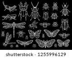 big hand drawn line set of... | Shutterstock .eps vector #1255996129