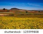 blooming niger seed in pindaya  ... | Shutterstock . vector #125599808