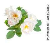 Dog Rose Flowers With Leaves ...