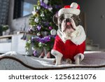 french bulldog in santa costume ... | Shutterstock . vector #1256121076