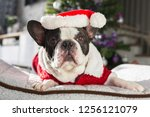 french bulldog in santa costume ... | Shutterstock . vector #1256121079