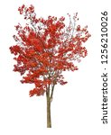 dark red autumn maple tree... | Shutterstock . vector #1256210026