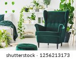 emerald green comfortable... | Shutterstock . vector #1256213173
