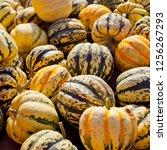 sweet dumpling squash    small...   Shutterstock . vector #1256267293