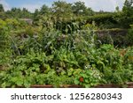 Potager Or Kitchen Garden With...